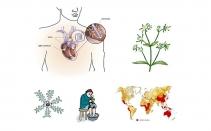 Illustrations pour livre de médecine